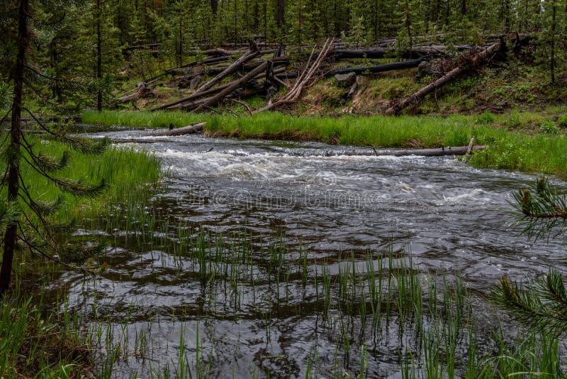 As águas do rio de Gibbon correm altamente imagem de stock royalty free