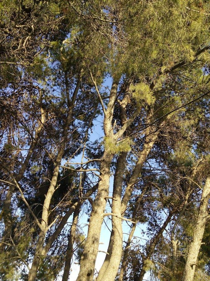 As árvores imagens de stock