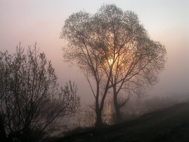 As árvores abraçadas. foto de stock