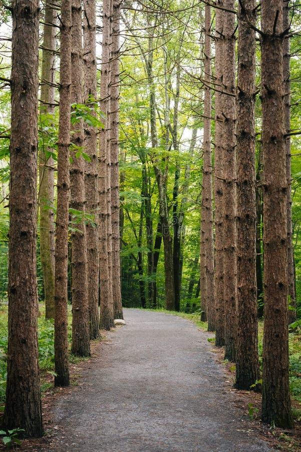 As árvores ao longo das quedas de Kaaterskill arrastam nas montanhas de Catskill, New York imagens de stock royalty free