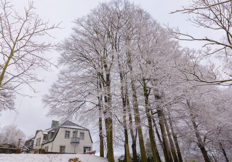 As árvores cobertos de neve dispararam perto de minha casa em gothenburg Parque chamado imagens de stock royalty free