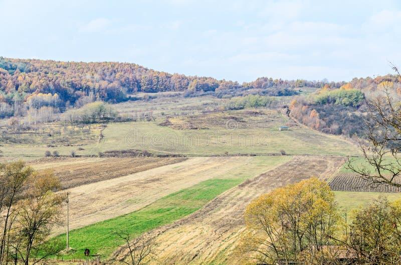 As árvores coloridas no tempo do outono, região de Horezu, laranja amarela saem imagem de stock royalty free