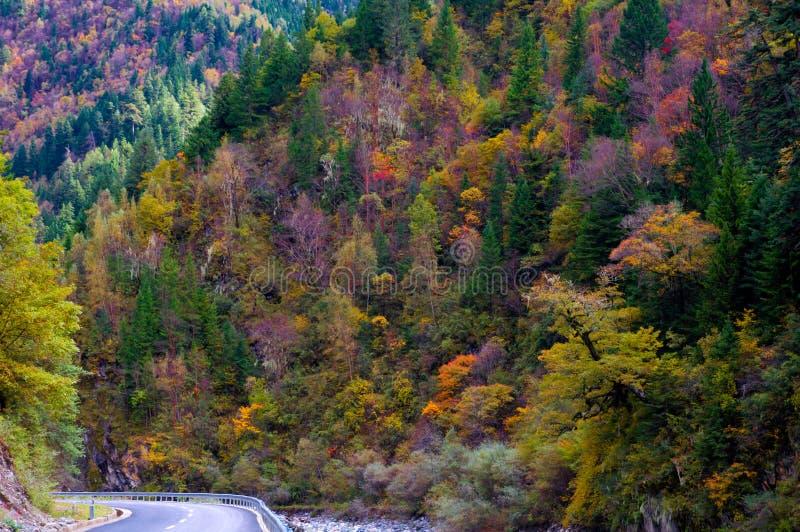 As árvores colorized na luz do sol imagens de stock royalty free