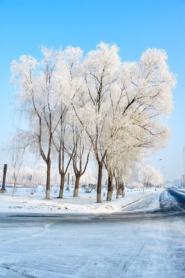 As árvores com escarcha branca imagem de stock royalty free