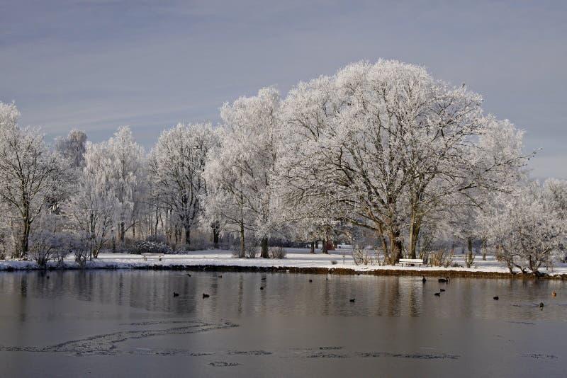 As árvores com lagoa ajardinam Laer ruim, Alemanha fotografia de stock royalty free