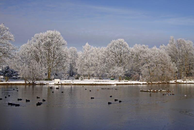As árvores com lagoa ajardinam no inverno, Alemanha foto de stock royalty free