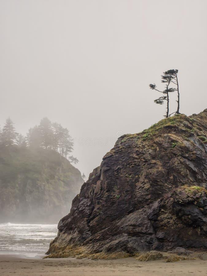 As árvores crescem em pilhas do mar no Sandy Beach imagem de stock royalty free
