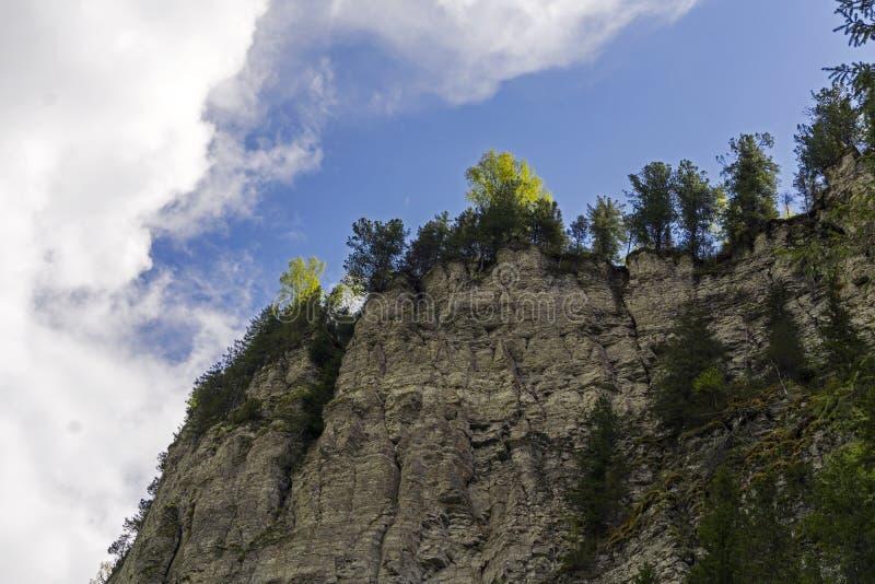 As árvores crescem nas pedras demasiado fotos de stock