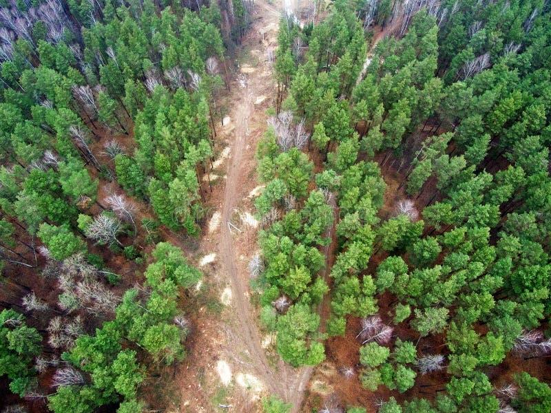 As árvores da floresta do olho do pássaro s veem de cima de Estrada secundária com um junho imagem de stock royalty free