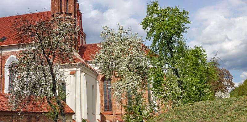 As árvores de Apple e de ameixa florescem na mola perto da igreja Católica velha de St Anne em Vilnius imagens de stock royalty free