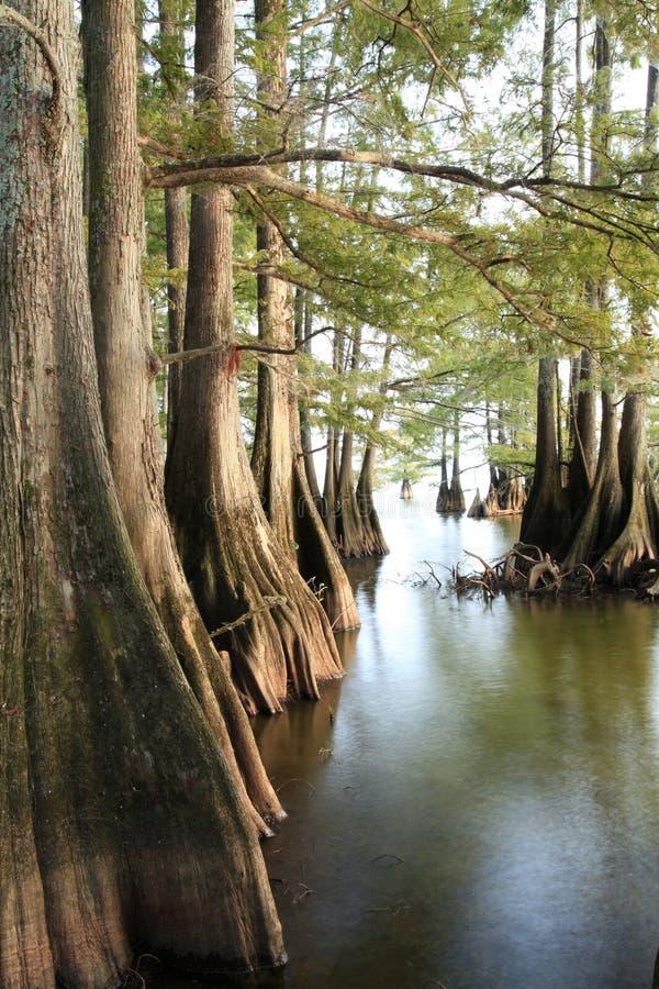 As árvores de Cypress calvo nos lagos afiam enquanto o Sun começa a se ajustar imagens de stock royalty free