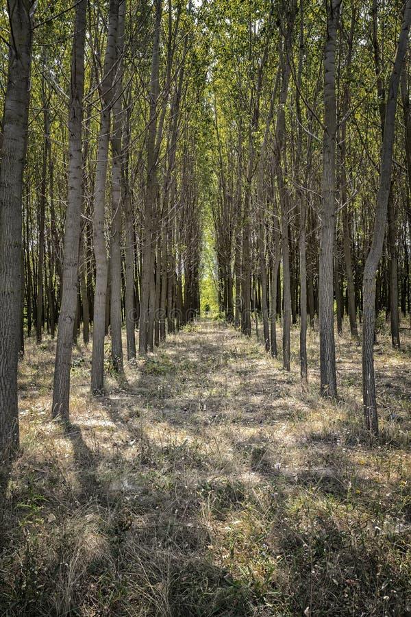 As árvores de floresta escavam um túnel na primavera o tempo imagens de stock royalty free