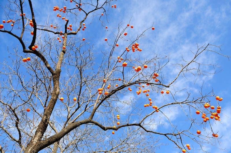 As árvores de fruto foto de stock