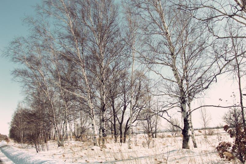 As árvores desencapadas na neve/inverno rural ajardinam/ foto de stock