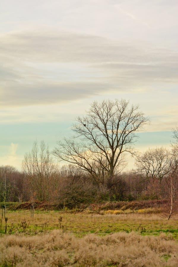 As árvores desencapadas na paisagem da região pantanosa do ` Gentbrugse meersen a reserva natural do ` imagens de stock