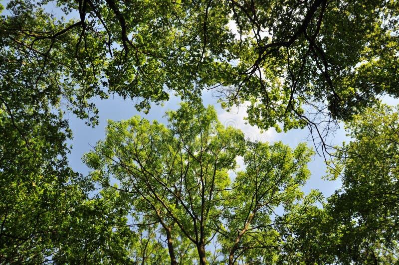 Download Floresta Verde Com Luz Solar Imagem de Stock - Imagem de outdoor, cenário: 29842739