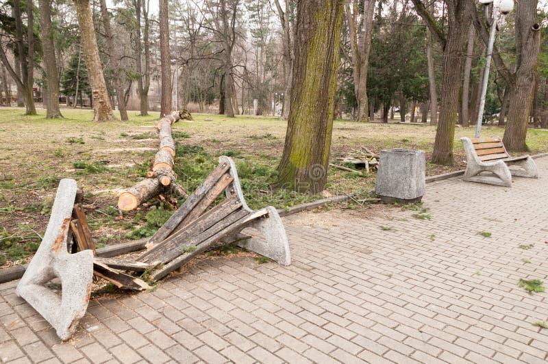As árvores do furacão caíram no campo de jogos foto de stock