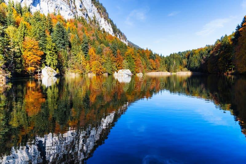 As árvores do outono e o céu azul refletiram no lago da montanha, Áustria, Tirol, Berglsteinersee imagens de stock royalty free