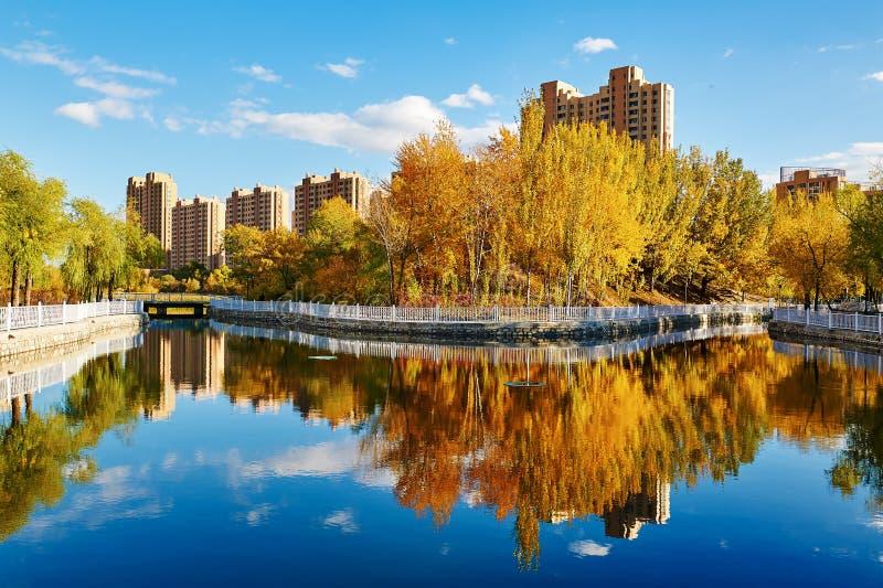 As árvores do outono e o por do sol da imagem invertida fotos de stock