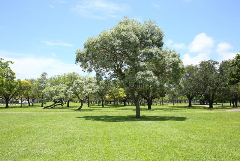 As árvores e a grama bonitas no feriado estacionam no Fort Lauderdale imagem de stock royalty free