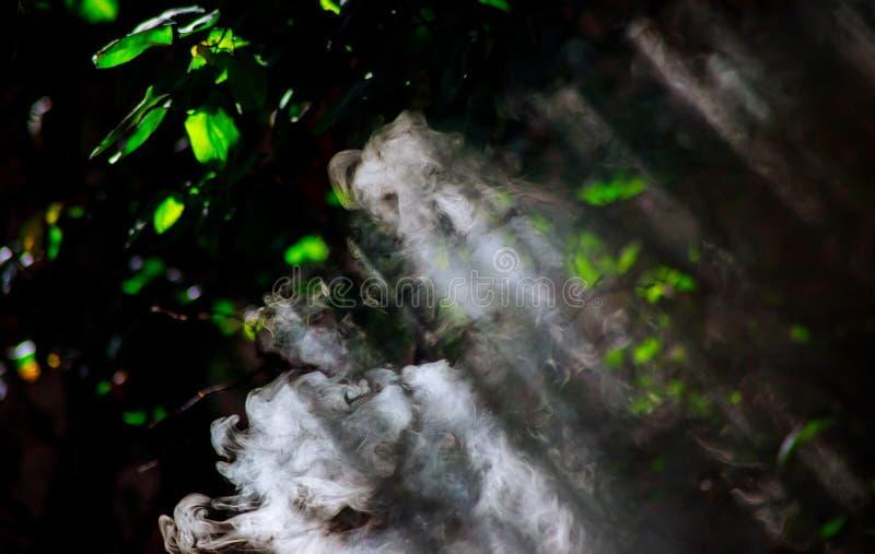 As árvores em sopros do fumo contra raios do sol fazem sua maneira através do fumo imagem de stock