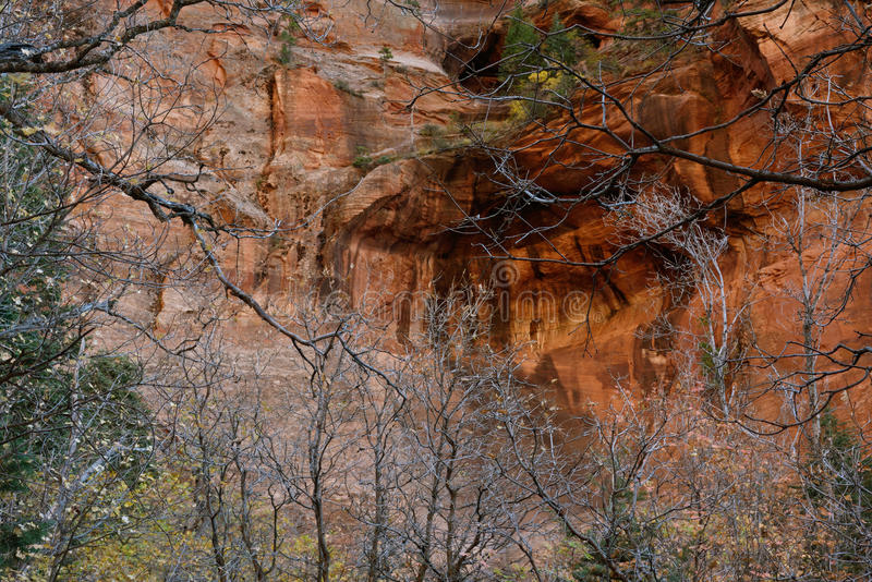 As árvores esqueletais e a cara norte de Beatty apontam, gargantas do Kolob, Zion National Park do dedo, Utá imagens de stock royalty free
