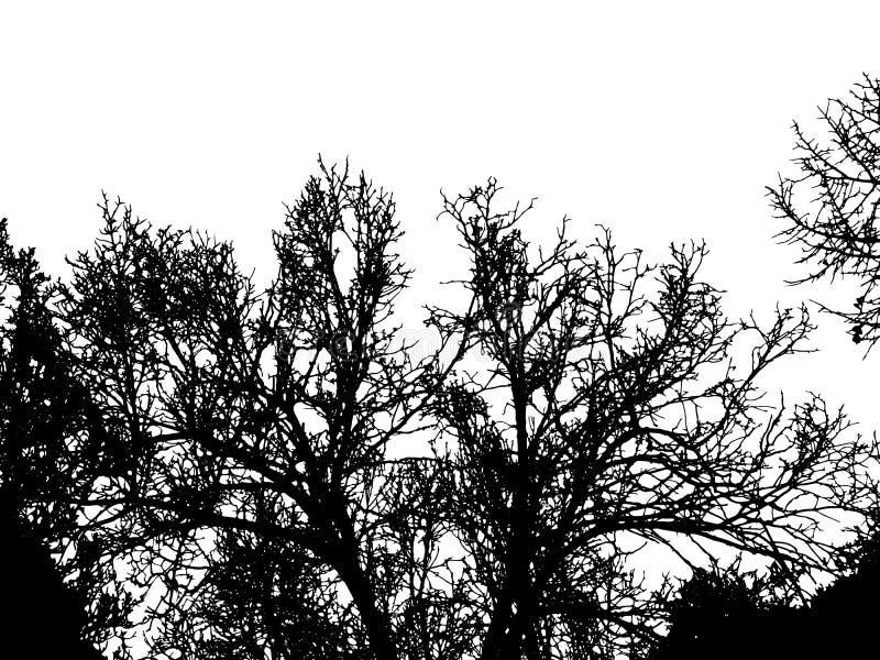 As árvores mostram em silhueta isolado no vetor branco do fundo ilustração do vetor