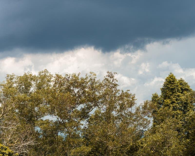 As árvores na floresta imagens de stock royalty free