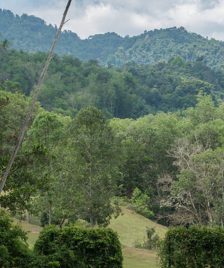 As árvores na floresta fotografia de stock royalty free