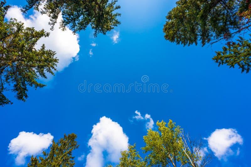 As árvores na floresta foto de stock
