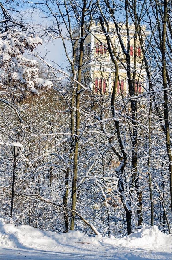 As árvores no fundo de uma torre de pulso de disparo em um inverno estacionam fotografia de stock