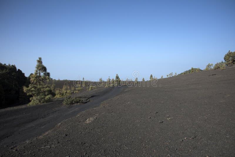 As árvores ocupam lentamente a lava imagem de stock royalty free