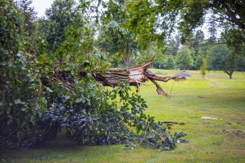 As árvores quebradas após o furacão poderoso na floresta após uma tempestade foto de stock royalty free
