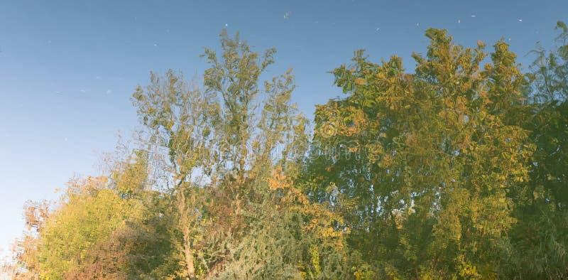 As árvores refletiram na água como um fundo imagens de stock