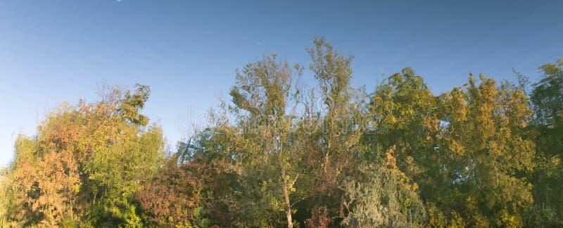 As árvores refletiram na água como um fundo foto de stock
