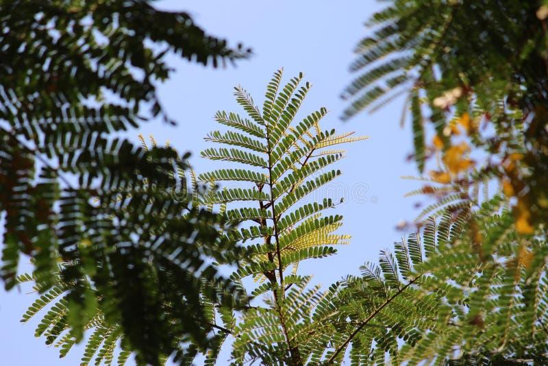 as árvores são vida fotografia de stock