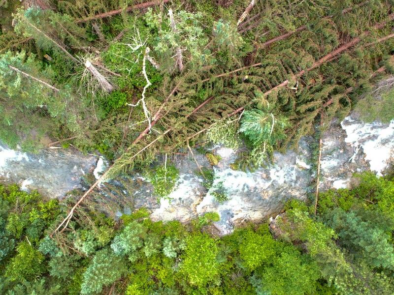 As árvores tragadas sobre o córrego na garganta do spearfish após o furacão aterram na foto do zangão da floresta imagens de stock royalty free