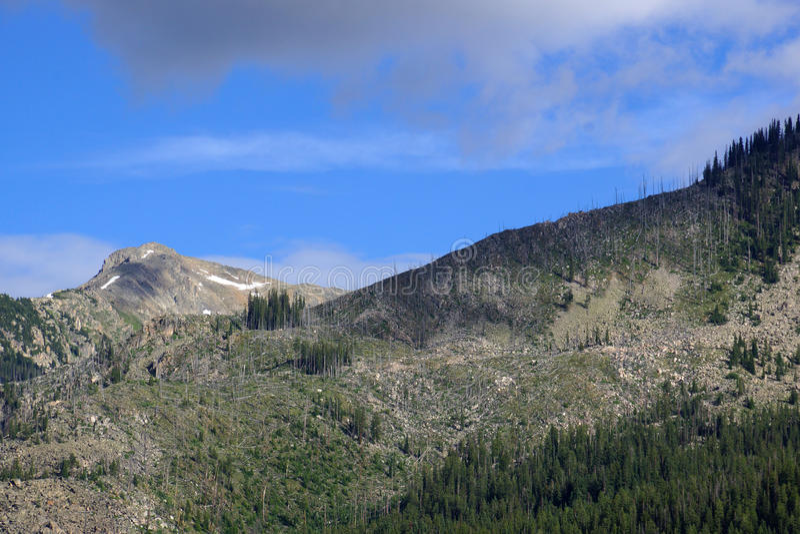 As árvores verdes e as árvores desencapadas nas montanhas da independência passam fotos de stock