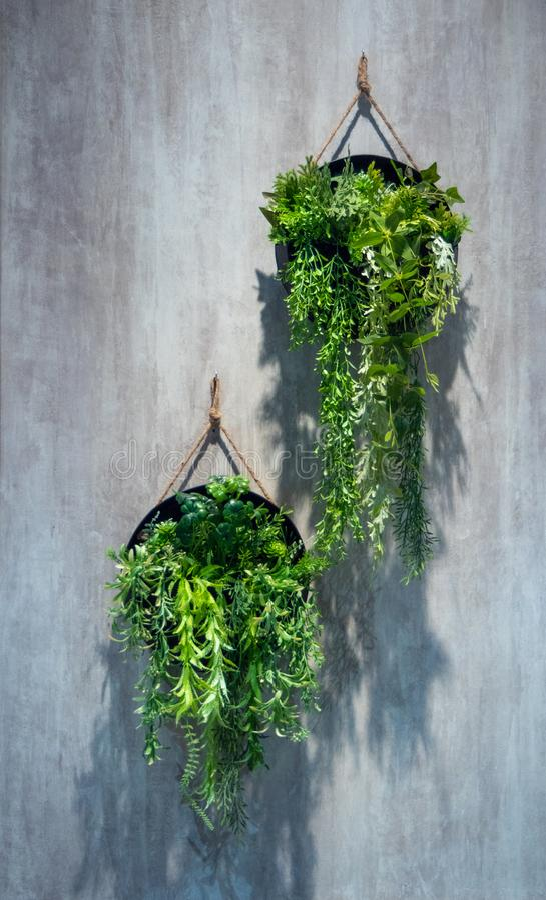 As ?rvores verdes em uns potenci?metros pretos penduram na parede cinzenta do cimento imagem de stock