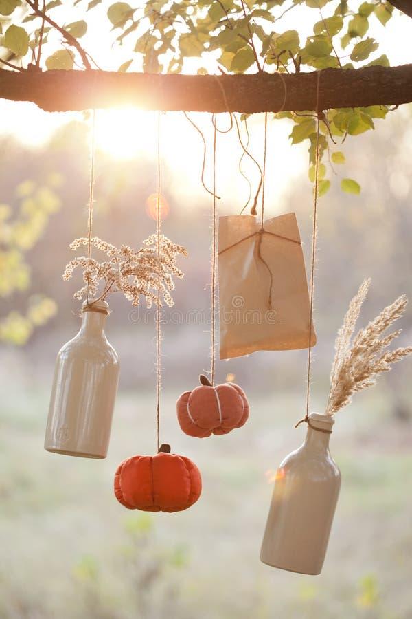 As abóboras colhidas decoram