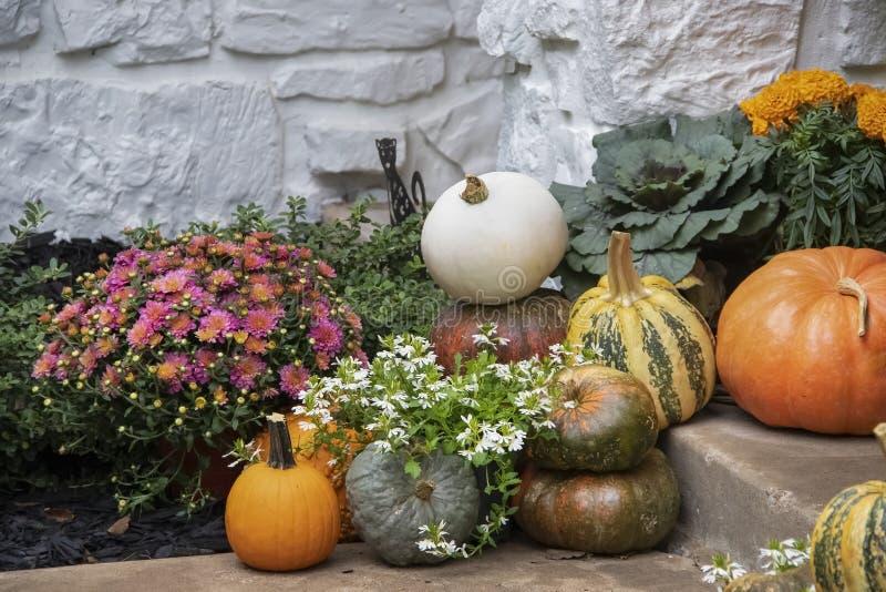 As abóboras e as flores coloridas brilhantes de outono arranjaram na parede de pedra pintada branco dos agains das etapas imagens de stock royalty free