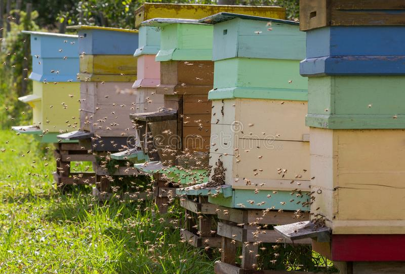 As abelhas do mel são enxame fotografia de stock