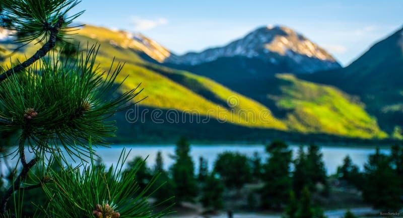 As agulhas do pinho da cena da montanha de Sawatch juntam o céu do lago imagens de stock
