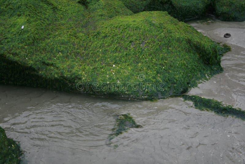 As algas cobriram a rocha fotografia de stock royalty free