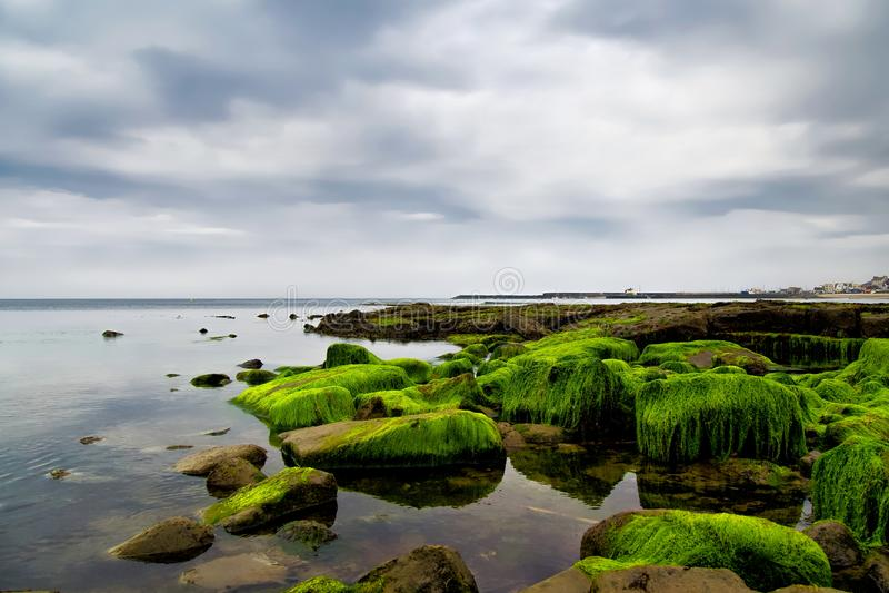 As algas cobriram rochas em Lyme Regis fotos de stock