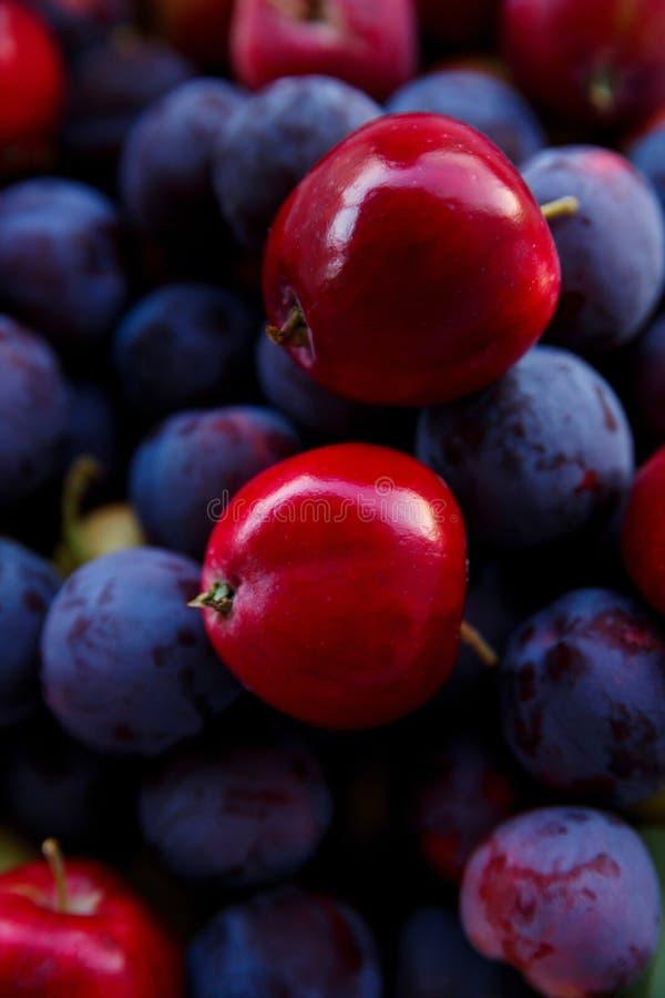 As ameixas azuis maduras e as folhas vermelhas fecham-se acima imagens de stock royalty free