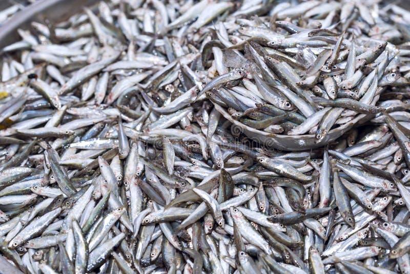 As anchovas frescas pescam na exposição do gelo no mercado do marisco dentro foto de stock royalty free