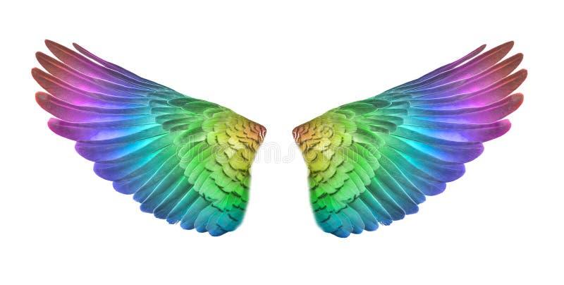 As asas coloridas do pássaro ajustaram-se isolado em Backgorund branco ilustração do vetor