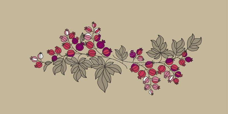 As bagas do corinto ramificam ilustração do vetor do esboço ilustração do vetor