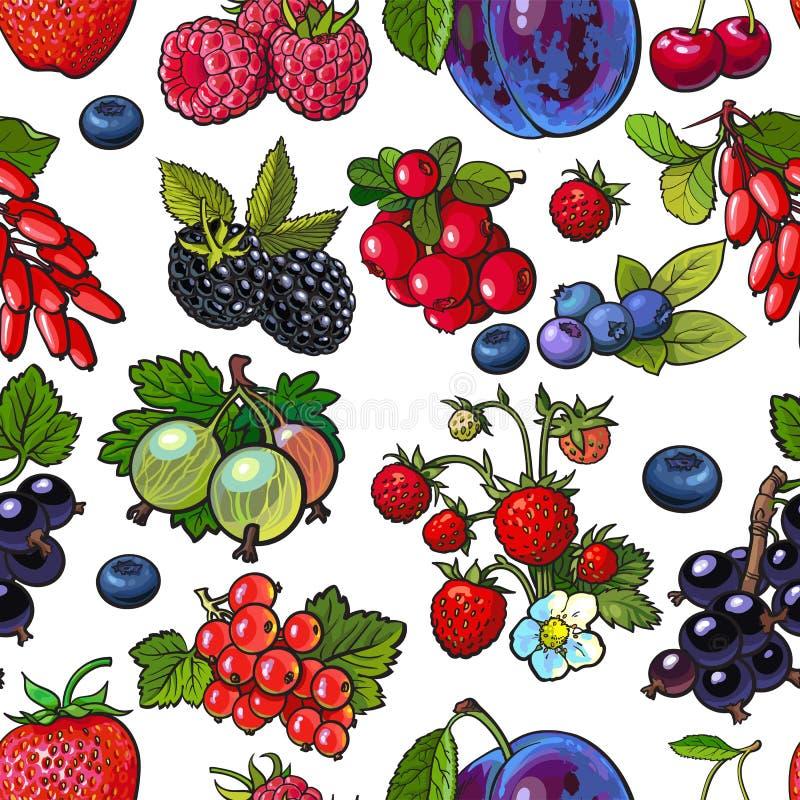 As bagas esboçadas gostam do mirtilo, framboesa, groselha, corrente, teste padrão sem emenda da ameixa ilustração stock